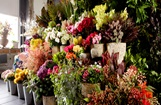 Greater Noida Florists