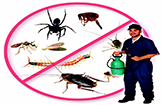 Greater Noida Pest Control Services
